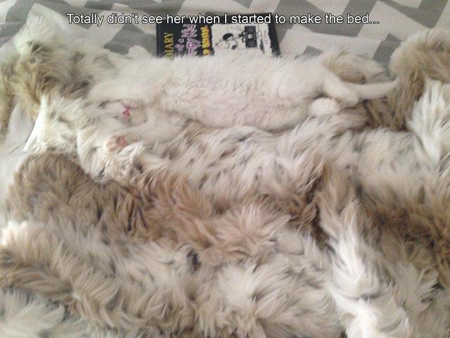 Fluffy cat on fluffy throw rug.