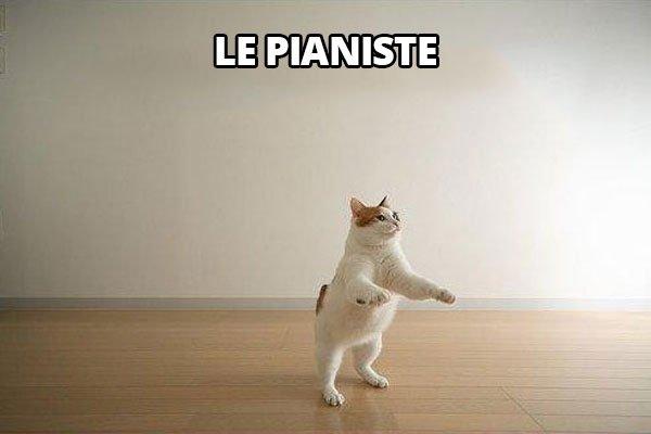 7-cat-invisible-piano