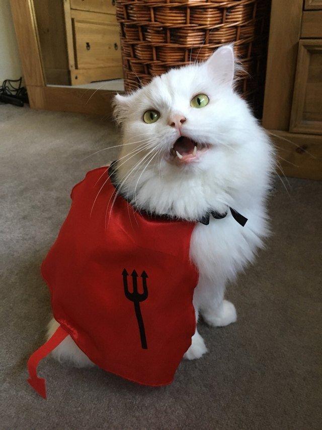 Cat wearing a devil cape costume