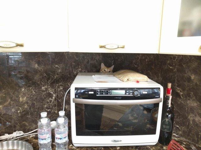 Cat hiding behind microwave.