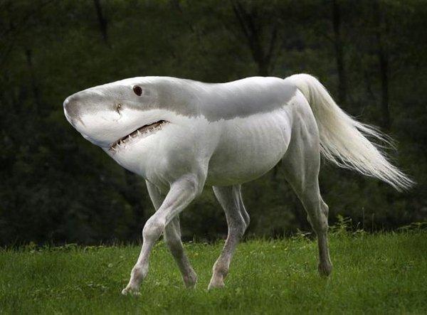 Animal8