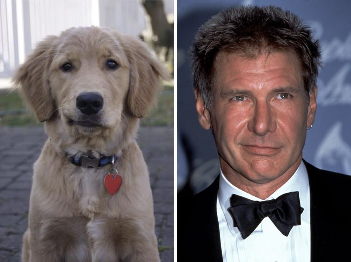 This Dog Looks Like Harrison Ford