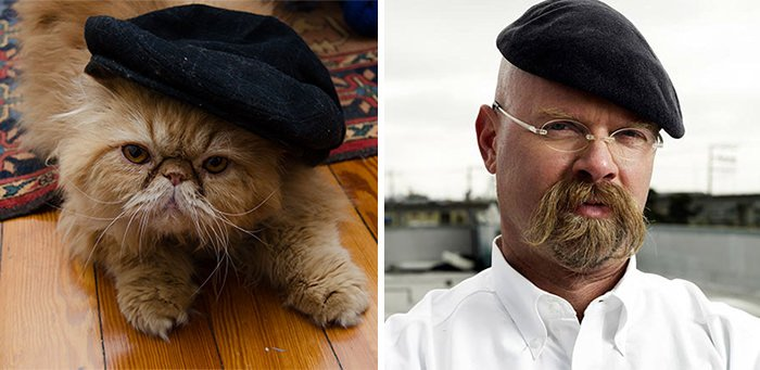 Cat Looks Like Jamie From Mythbusters