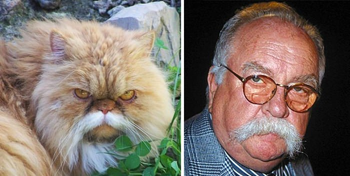 Mustache Cat Looks Like Wilford Brimley