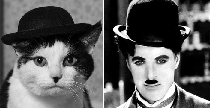 This Cat Looks Like Charlie Chaplin