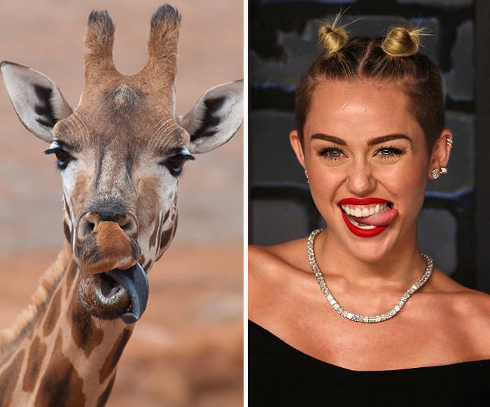 Giraffe Looks Like Miley Cyrus