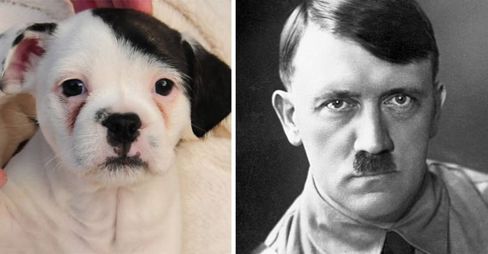 This Puppy Looks Like Adolf Hitler
