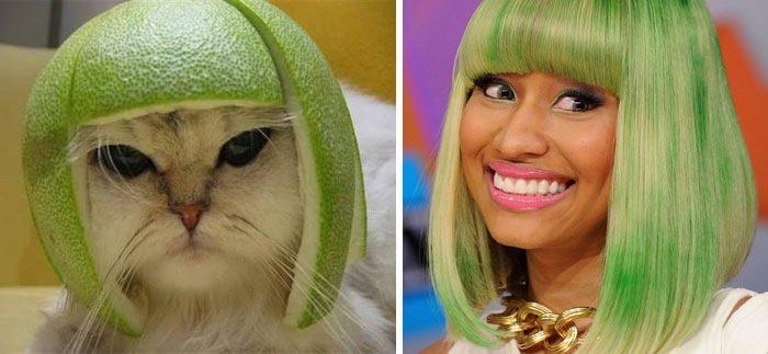 Pomelo Cat Looks Like Nicky Minaj