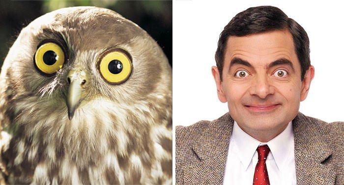Owl Looks Like Rowan Atkinson