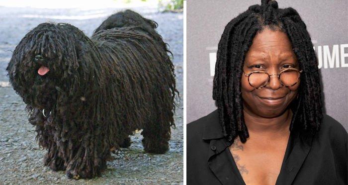 This Dog Look Like Whopi Goldberg