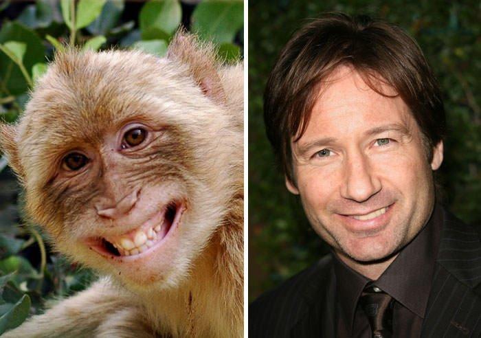 Monkey Looks Like David Duchovny