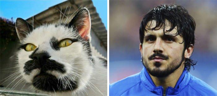 Cat Looks Like Gennaro Gattuso
