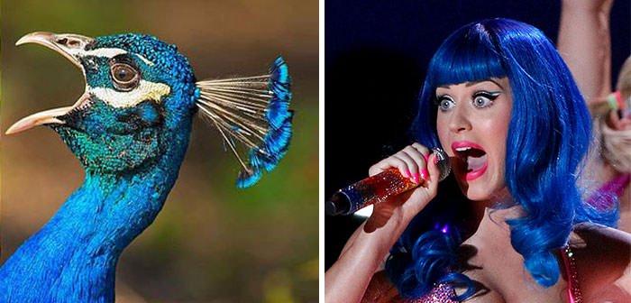 Peacock Looks Like Katy Perry