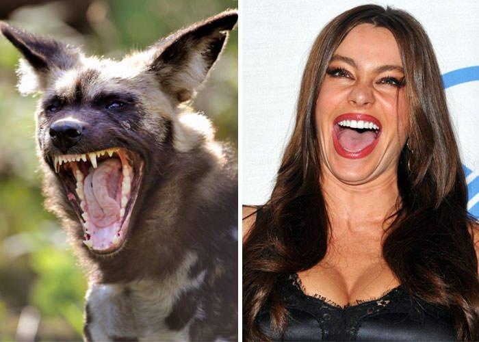 African Wild Dog Looks Like Sofia Vergara