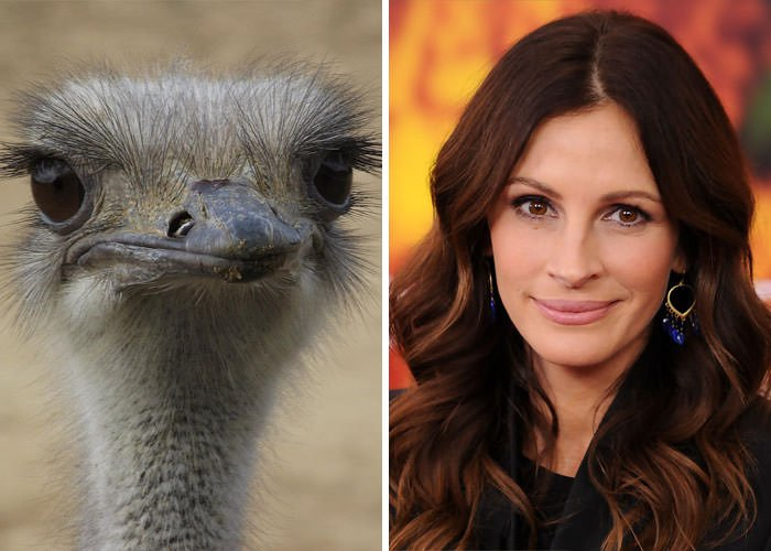Ostrich Looks Like Julia Roberts