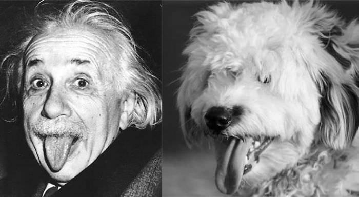 Einstein & Pufy
