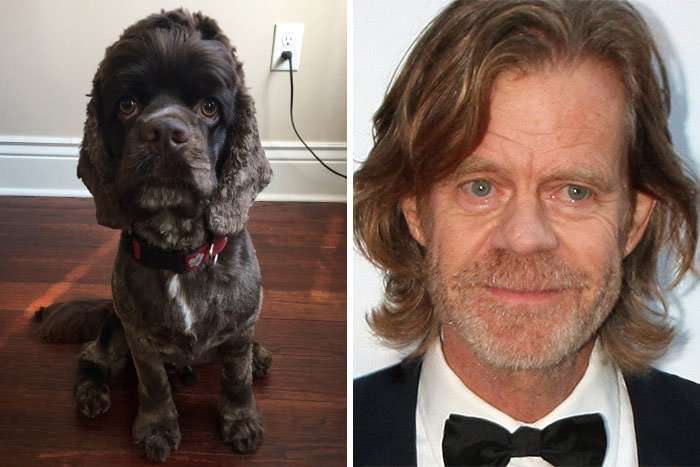 This Dog Looks Like William H. Macy