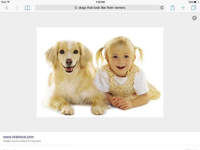 Dog That Looks Like Child