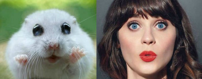 This Hamster Looks Like Katy Perry