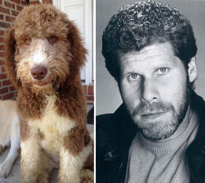 This Dog Looks Like Ron Perlman