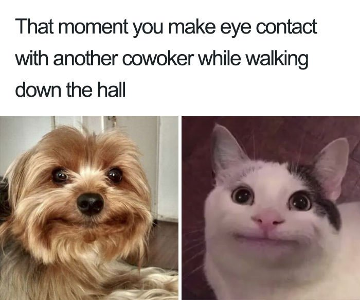 Funny introvert memes