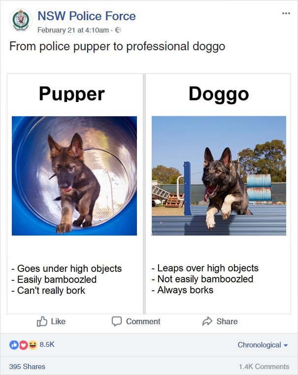 From Police Pupper To Professional Doggo