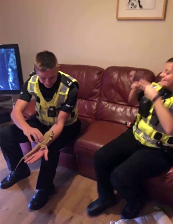 When The Police Rock Up At Your House And They Are More Interested In Your Bearded Dragon Than You