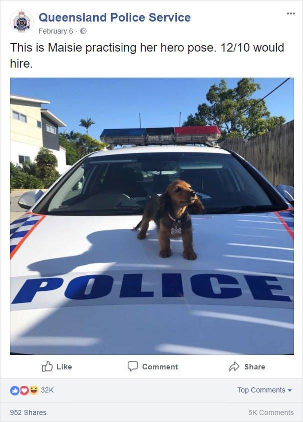 Police Dog Rating