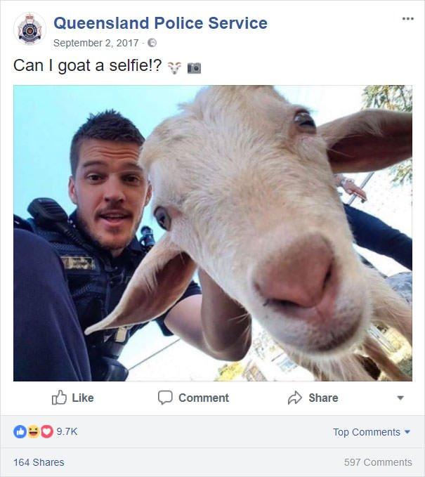 Can I Goat A Selfie?