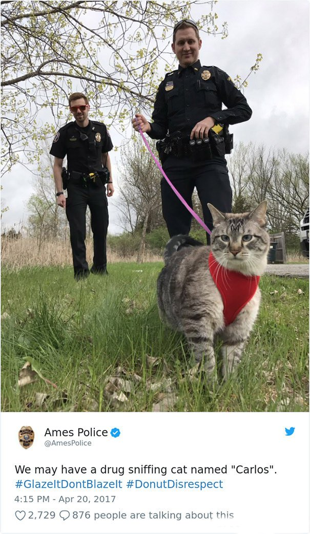 Carlos, The Police Cat