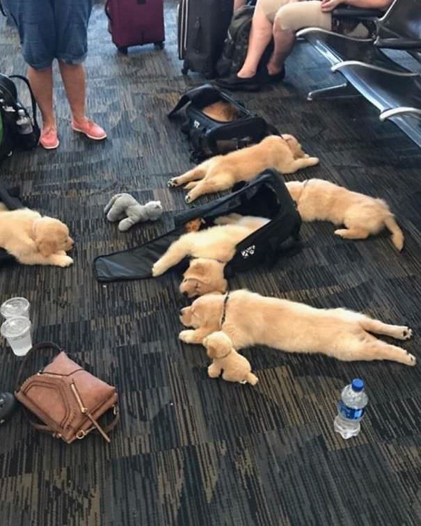 Oh No, Someone Spilled All Their Puppies