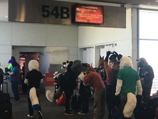 Apparently Booked A Business Trip On A Furry Flight. I'm The Only Non-Furry