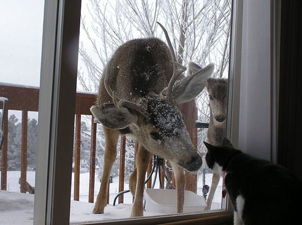 Deer Asking Cat To Go Inside