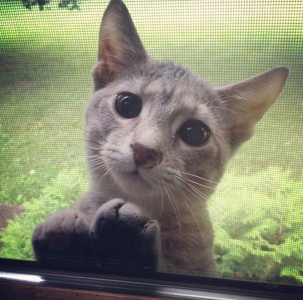 Please Let Me In, Hooman