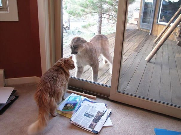 Hey ... Hey, Let Me In Bro!