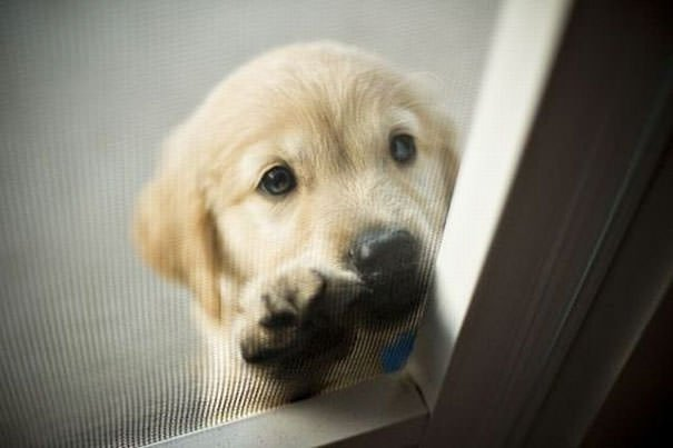 Hey I Forgot My Keys, Can You Let Me In?
