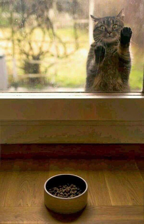Give Me Food!