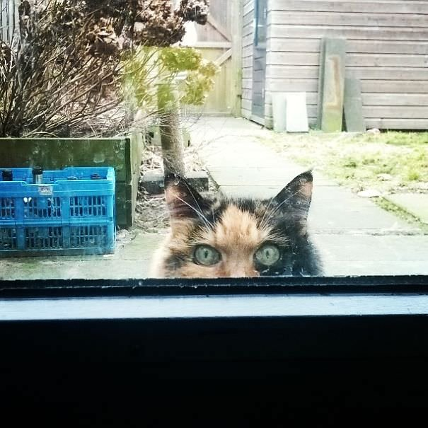 Stop Taking That Picture And Open The Door... Now