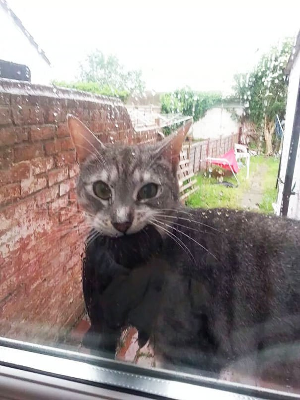Bro, Let Me In. I Have Something For You
