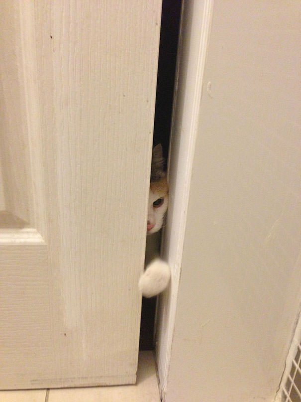 Let Me In, Human!