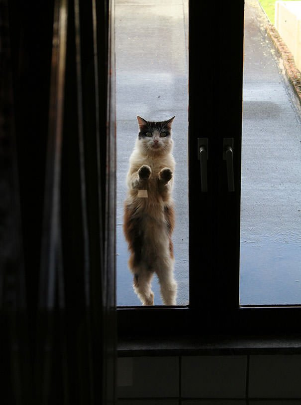 Let Me In!