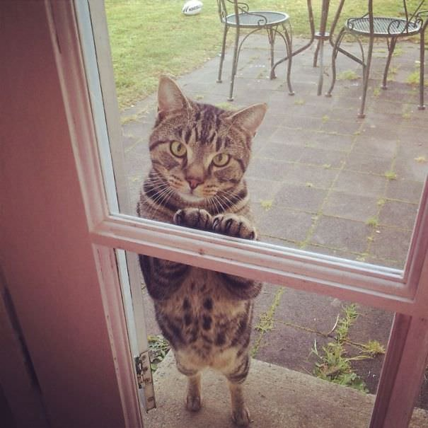 Let Me In Right Now!