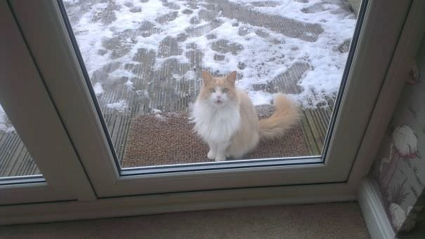 Omg Let Me In Its Cold!