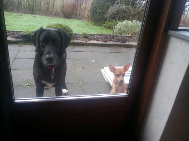 Please Let Us In!