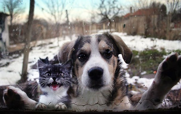 Let Us In!
