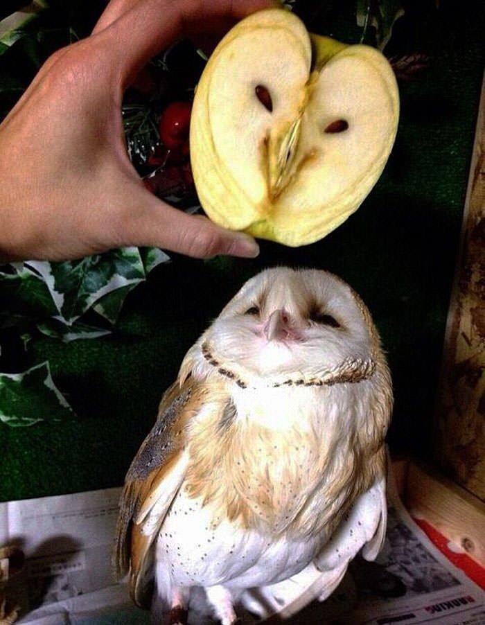 Apple Looks Like An Owl