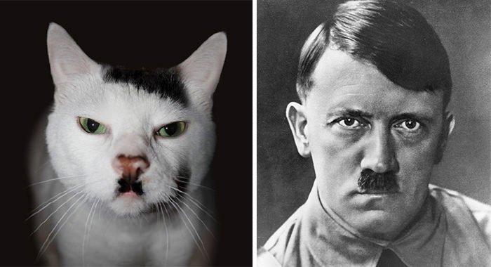 This Cat Looks Like Hitler