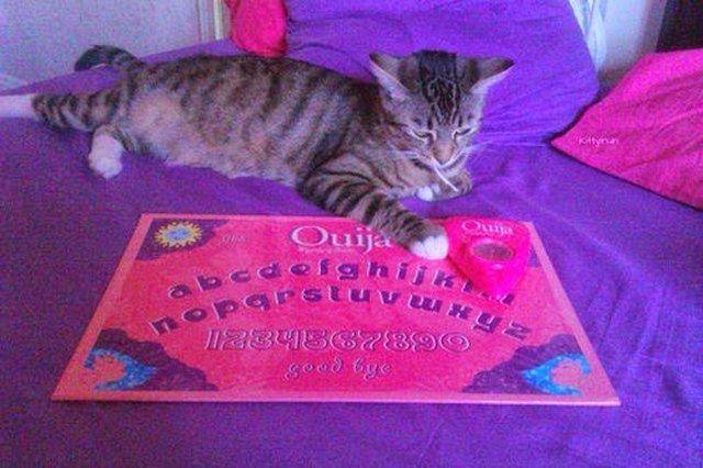 Kitten sitting by a Ouija board