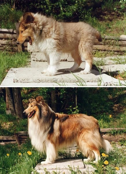 animals-before-after-growing-up-5_resultat
