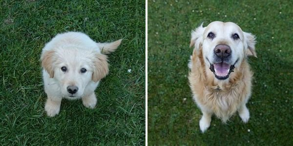 animals-before-after-then-now-16_resultat